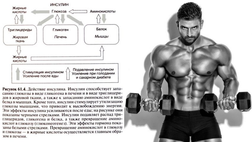 Insulin in bodybuilding – Eat together!